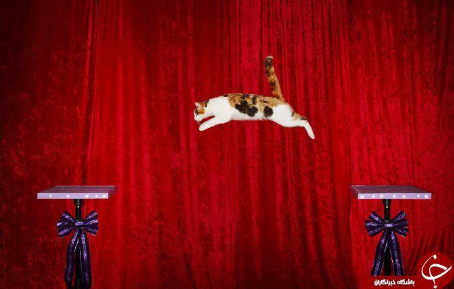 حیواناتی که رکورد خود را در گینس ثبت کردند را اینجا ببینید +تصاویر