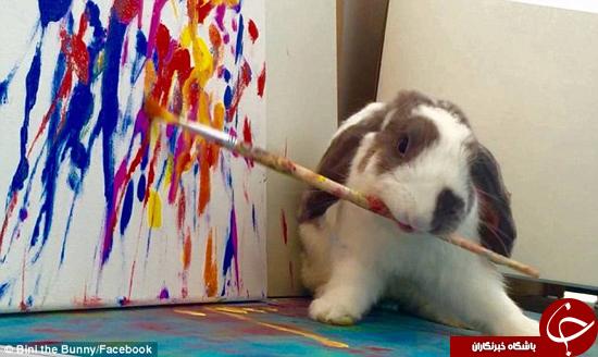 رنسانس خرگوش! + تصاویر