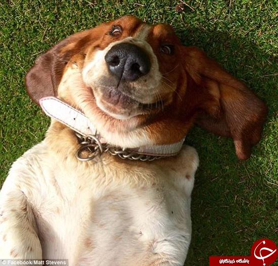 لبخند سگها + تصاویر