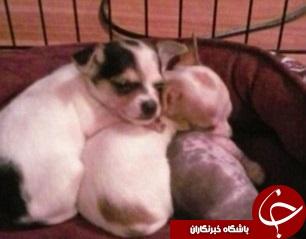کشتن وحشیانه سگ بخاطر بر ملا نشدن دروغ بارداری+تصاویر