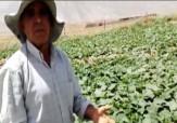 باشگاه خبرنگاران - گلایه کشاورزان از مسئولان + فیلم
