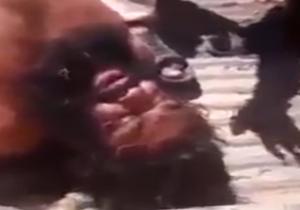 جلاد غول پیکر داعشی در چنگال ارتش سوریه + فیلم