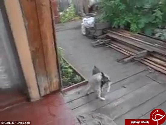 این سگ به دوستش گربه کمک میکند + تصاویر