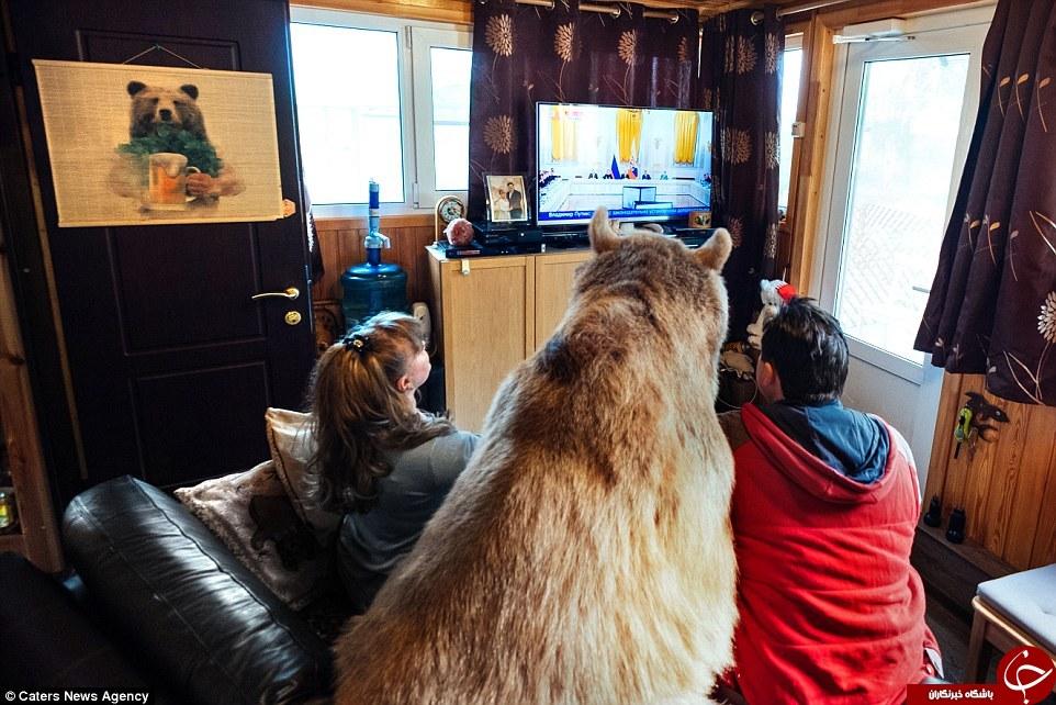 یک زوج روسی که با خرس زندگی میکنند +تصاویر /// در حال کار