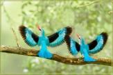 باشگاه خبرنگاران -وقتی پرندگان روی بوم نقاشی لانه می کنند+تصاویر