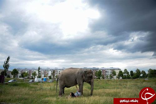 از عبادت مرتاض هندی تا ساخت پای مصنوعی برای فیل