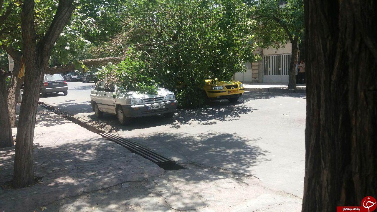 سقوط درخت روی دو خودرو در مشهد