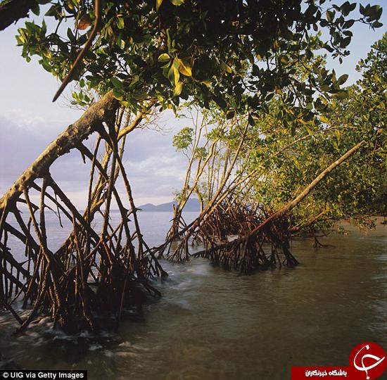 تغییرات آب و هوایی چه بلایی سر پوششهای گیاهی میآورد؟ +تصاویر