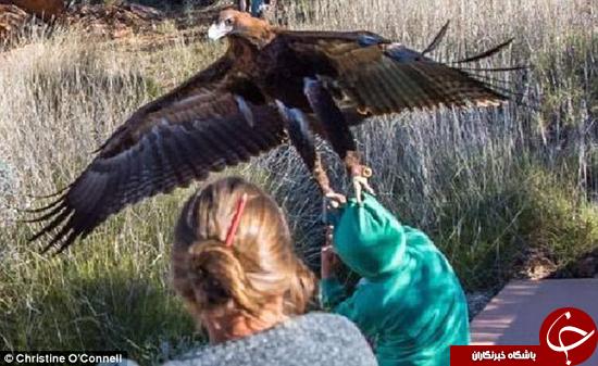 عقابی که قصد داشت انسان شکار کند +تصاویر