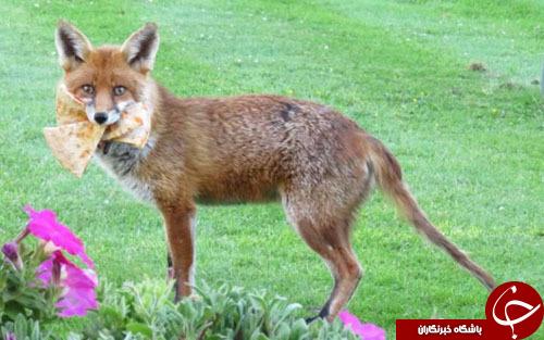 از پیتزا خوردن روباه تا کفشهای معروف ترزا مِی