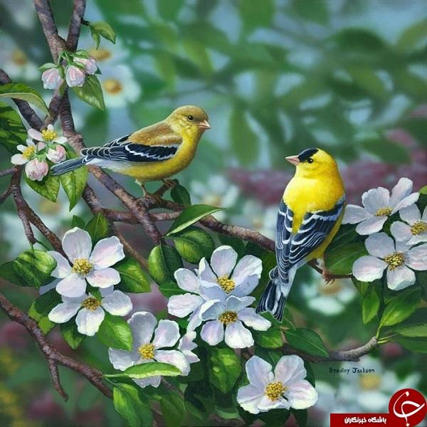 نقاشی زیبا از پرندگان + تصاویر