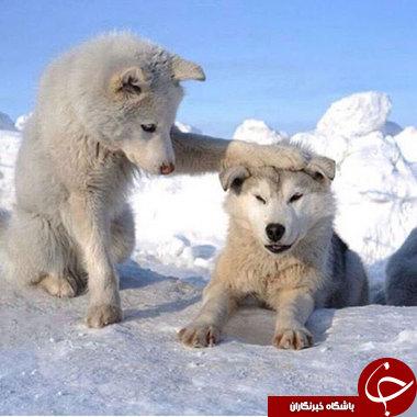 وقتی حیوانات احساساتی میشوند