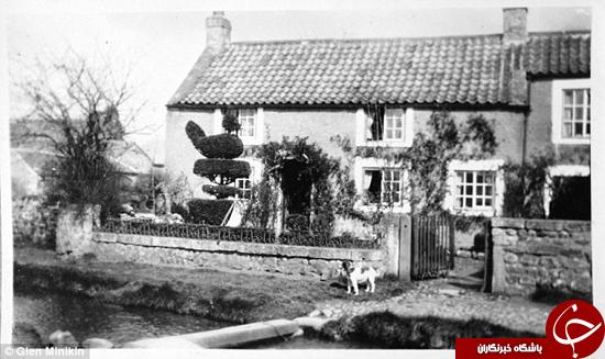 خروس 100 ساله +تصاویر