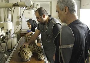 افتتاح کلینیک تخصصی حیات وحش در استان