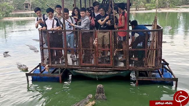 وحشتناک ترین مزرعه تمساح ها در تایلند تعطیل شد+ تصاویر