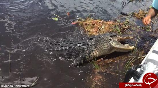 لحظه وحشتناک حمله تمساح به قایق +تصاویر