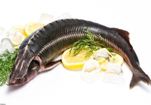 دانستنیهایی درباره خرید ماهی