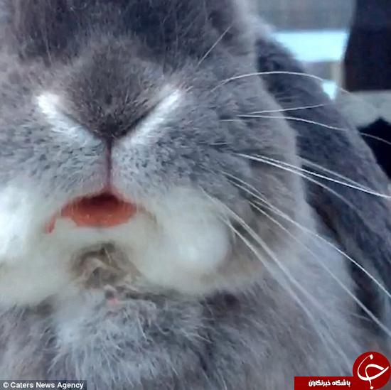 این خرگوش با مزه را حتما ببینید +تصویر
