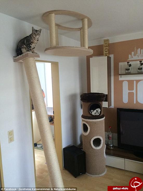 آیا این گربهها خوش شانس ترین گربهها در جهان هستند؟ +تصاویر