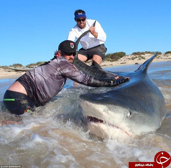 تصاویری از صید بزرگ دو ماهی گیر نترس