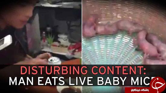 خوردن موشهای زنده +تصاویر