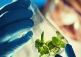 باشگاه خبرنگاران -انعقاد قرارداد موسسه رازی با کارگروه زیست فناوری