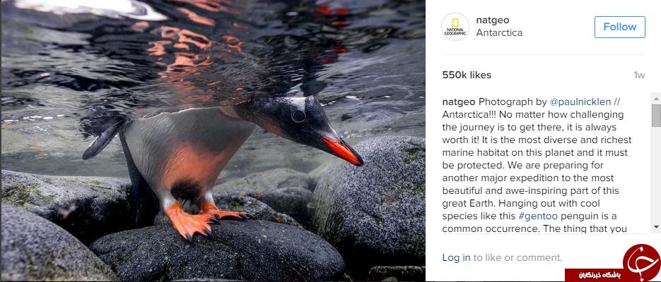 سفربه دنیای حیوانات در اینستاگرام نشنال جئوگرافی +10عکس
