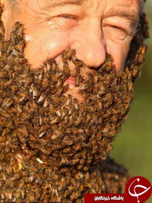 صورتی با یک کندوی عسل+10 عکس