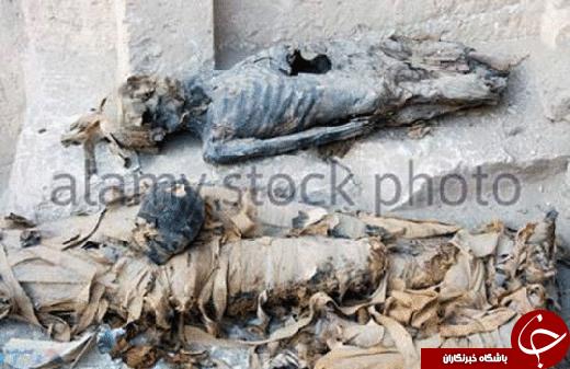 رسوایی در مصر؛ مومیاییها در میان زبالهها