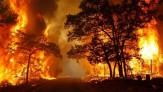 باشگاه خبرنگاران - سوته دلی به نام جنگل/ سریال تلخ آتشسوزی جنگلها و انسانهایی که مقصرند