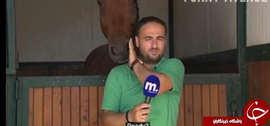 اسبی که مصمم است فیلمبرداری را به هم بزند +تصاویر