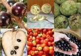 باشگاه خبرنگاران - پذیرایی از المپیکیها با ۴۰ نوع میوه برزیلی + تصاویر