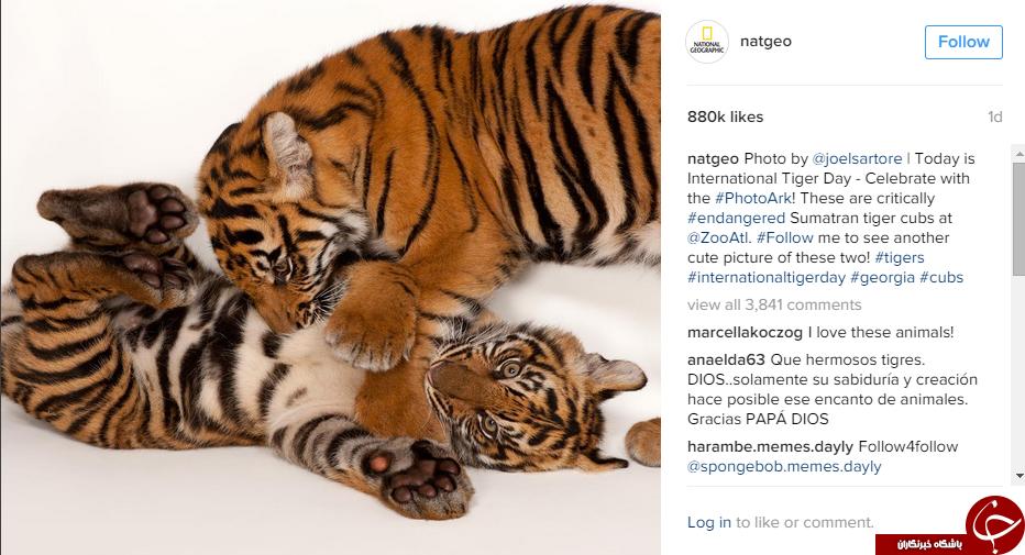سفر ی به دنیای حیوانات با اینستاگرام نشنال جئوگرافی+10 عکس