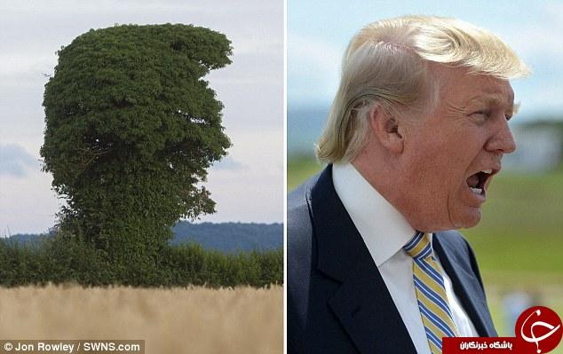 درختی با شکل و شمایلی کاملاً متفاوت/این درخت شما را یاد چه کسی میاندازد؟