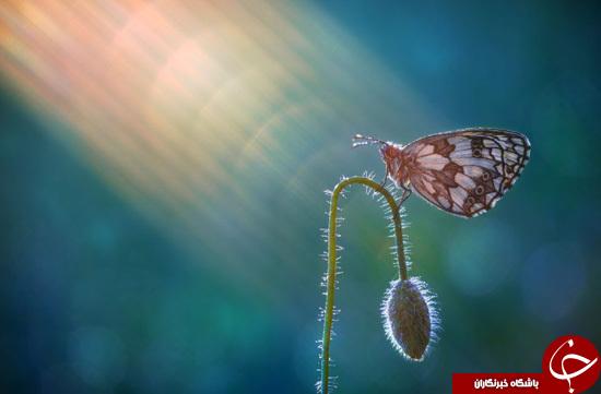 زندگی بینظیر حشرات از فاصلهای نزدیک +تصاویر