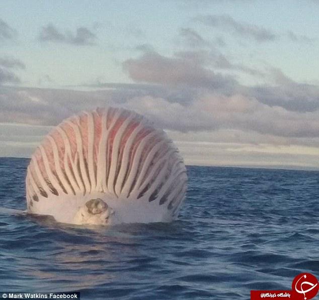 موجودی عجیب در دریا که همه را به اشتباه انداخت +تصاویر