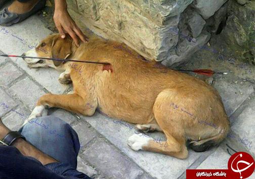 سگآزاری دلخراش در مشهد+عكس