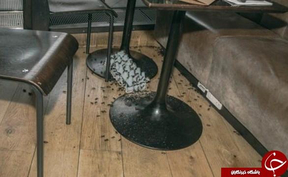 حمله باحشرات زنده به دو رستوران در انگلیس+عکس