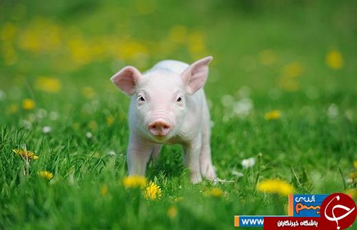 عکس/ نگاهی به نگاه خاص و زیبای حیوانات