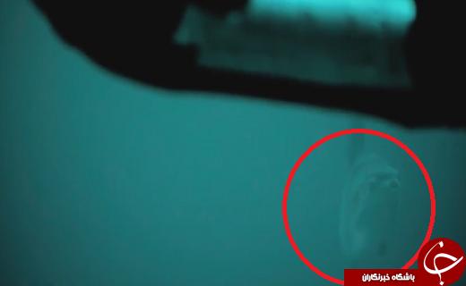 تصاویر هیجانانگیز از بزرگترین ماهی استخواندار جهان +عکس