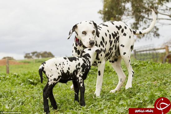 تصاویر دیدنی از حیوانات متفاوت ولی شبیه به هم