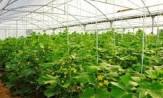 توسعه کشت گلخانهای و کشاورزی مدرن در استان