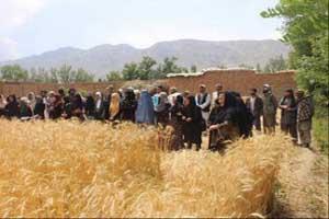 حمایت دولت از فعالیتهای کوچک کشاورزی در ولایت کابل