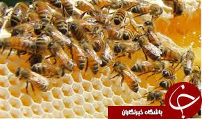 شیوه جدید داعش برای استخدام نیرو: استفاده از بچه گربه و زنبور عسل برای تحت تأثیرقرار دادن مردم+ تصاویر