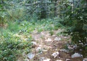 زبالههای رها شده در جنگلهای گلستان + فیلم