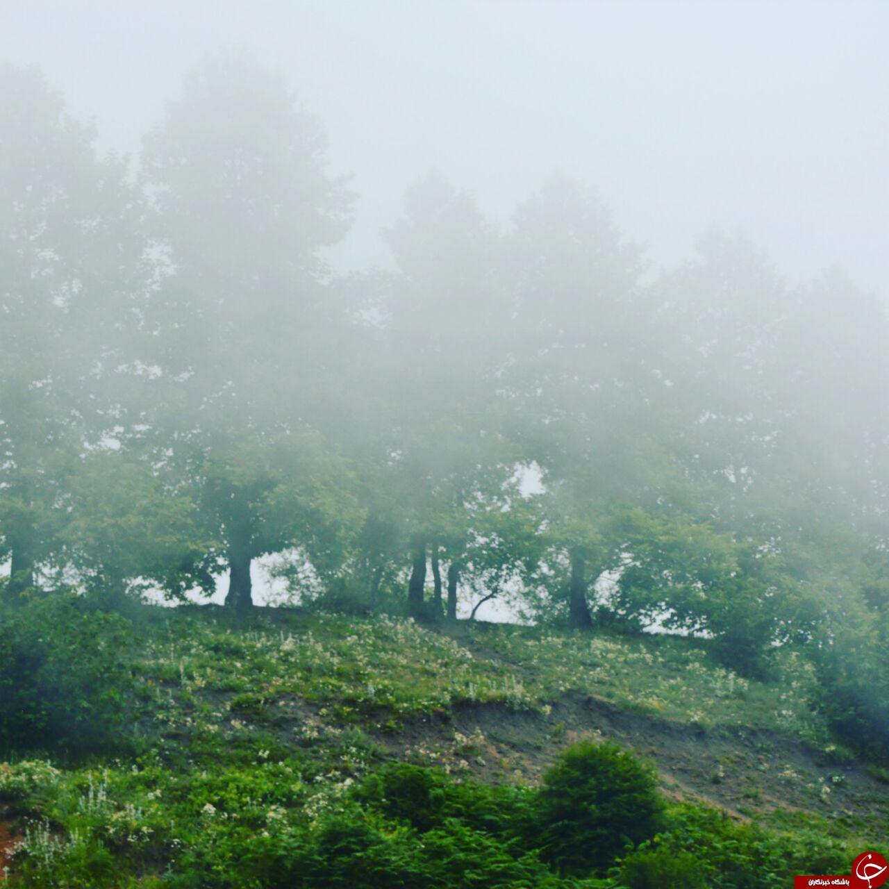 گزیده عکس های خبری در مازندران