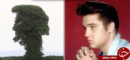درخت شبیه ترامپ +تصاویر