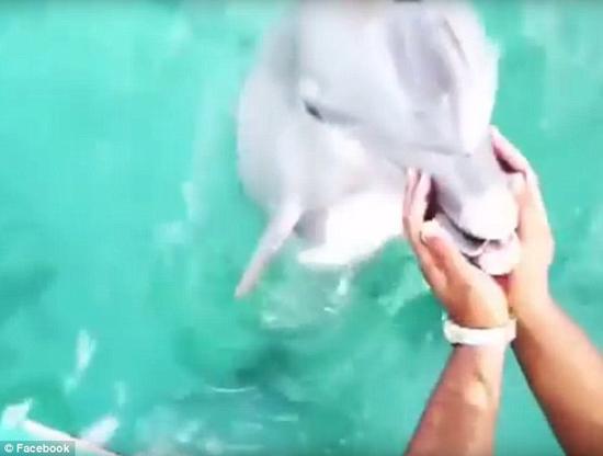 دلفینی که تلفن همراه را از اعماق آب بازگرداند +عکس