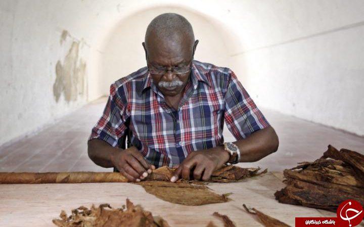 ساخت بزرگترین سیگار برگ جهان در کوبا+ تصاویر