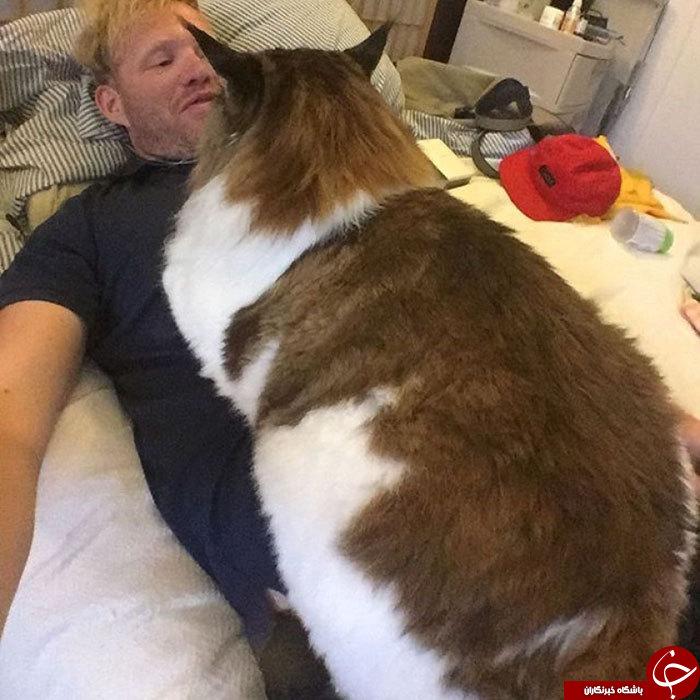 بزرگترین گربه جهان را اینجا ببینید +تصاویر